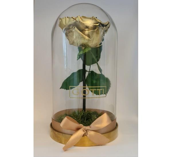 Trandafir criogenat Gold Gotti XXL