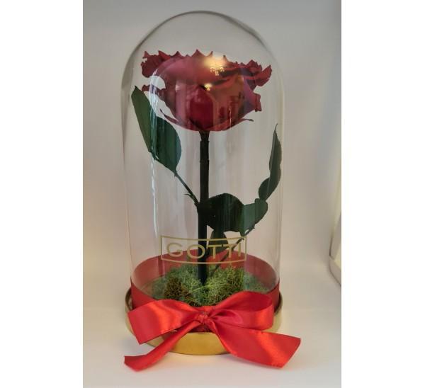 Trandafir criogenat Roșu XXL Gotti