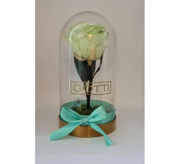 Trandafir criogenat Mint Gotti