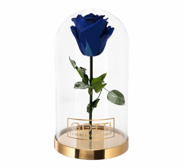 Trandafir Criogenat  Albastru Gotti